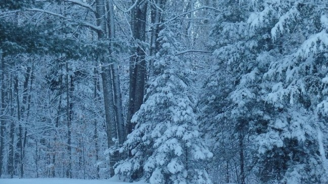 Image result for winter weather links
