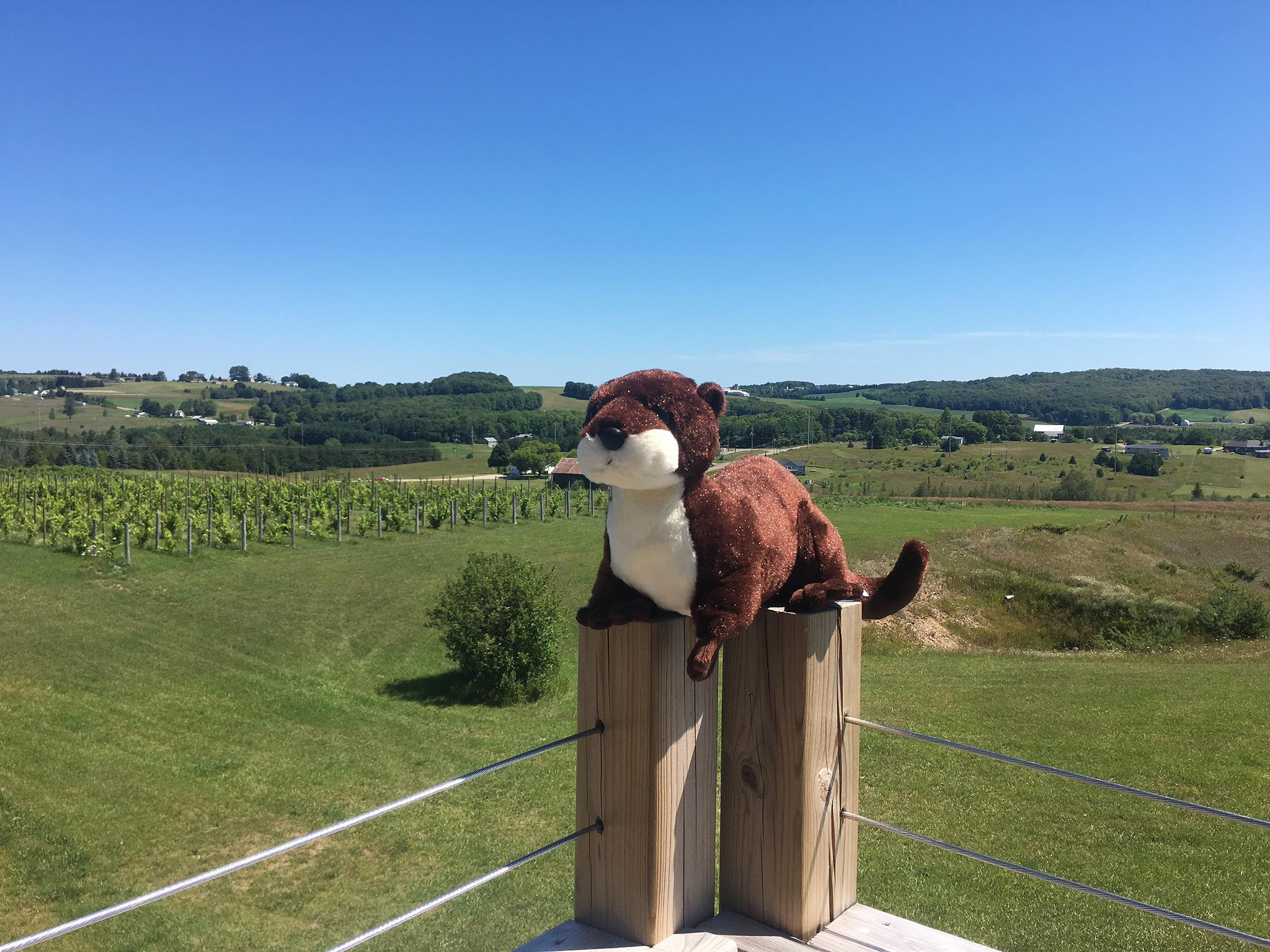 Help find owner of stuffed otter left at northern michigan winery wpbn courtesy head winemarker josh morgan with petoskey farms vineyard winery publicscrutiny Choice Image