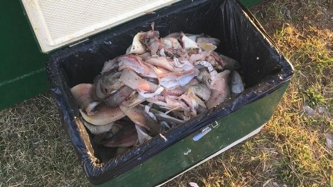 DNR look for owner of cooler involved in walleye poaching